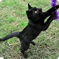 Adopt A Pet :: Marcia - Gonzales, TX