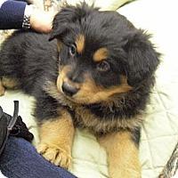 Adopt A Pet :: Jerome - Wickenburg, AZ