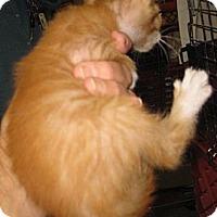 Adopt A Pet :: Scrabble - Dallas, TX