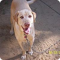 Adopt A Pet :: Angel - Hayden, ID
