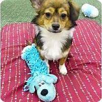 Adopt A Pet :: Juliet - Mocksville, NC