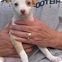 Adopt A Pet :: WHITNEY - Mission Viejo, CA