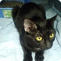 Adopt A Pet :: Jedi - Willington, CT