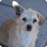 Adopt A Pet :: Addie and Buster - Arenas Valley, NM