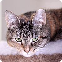 Adopt A Pet :: Heatherette - Chicago, IL