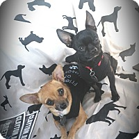 Adopt A Pet :: Peeta and Prim - Marietta, GA