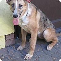 Adopt A Pet :: Bean - Riverside, CA