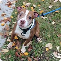 Adopt A Pet :: Eustace Peevly - Troy, MI