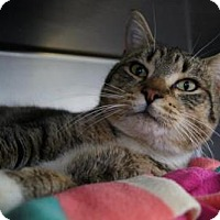 Adopt A Pet :: Tony - New Milford, CT
