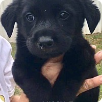 Adopt A Pet :: Missy - Burlington, VT