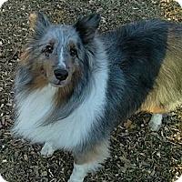 Adopt A Pet :: Patrick - COLUMBUS, OH