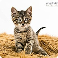 Adopt A Pet :: Hennessy - Eagan, MN