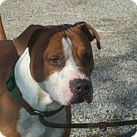 Adopt A Pet :: Dozer - Paris, IL