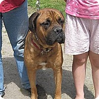 Adopt A Pet :: Lucy - Roy, WA