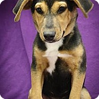 Adopt A Pet :: MollieCule - Broomfield, CO