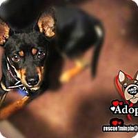 Adopt A Pet :: Blake - Huntington Beach, CA