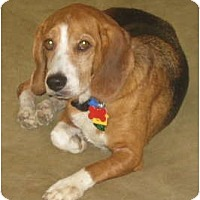 Adopt A Pet :: Tucker PENDING - Indianapolis, IN