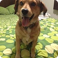 Adopt A Pet :: Eddie - Saskatoon, SK