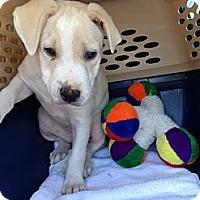 Adopt A Pet :: Apple - Sunnyvale, CA