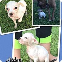 Adopt A Pet :: aiden - Scottsdale, AZ
