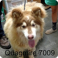 Adopt A Pet :: Quagmire - Greencastle, NC