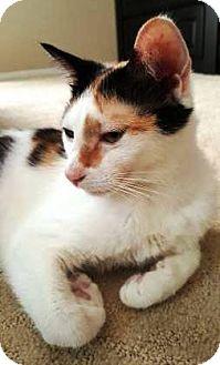 Calico Cat for adoption in Orange, California - Candi