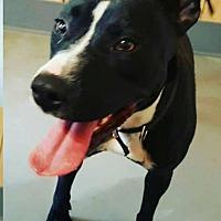 Adopt A Pet :: PRIN - McKenzie, TN