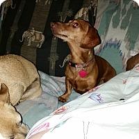 Adopt A Pet :: Minnie - Pinellas Park, FL