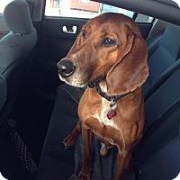 Adopt A Pet :: Trapper: Fairfax - Cincinnati, OH