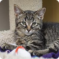 Adopt A Pet :: Jackson - Naperville, IL
