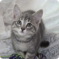 Adopt A Pet :: Tessa - Bristol, CT