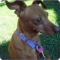 Adopt A Pet :: Petunia - Toronto/Etobicoke/GTA, ON