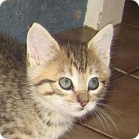 Adopt A Pet :: LILY - 2013 - Hamilton, NJ