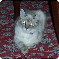 Adopt A Pet :: Koda - Catasauqua, PA