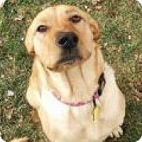 Adopt A Pet :: Wendy - Denver, CO