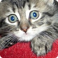Adopt A Pet :: Sunny - Dallas, TX