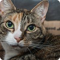 Adopt A Pet :: Bella B. - New York, NY