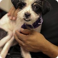 Adopt A Pet :: Cuchi - Jupiter, FL