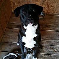 Adopt A Pet :: Luke - Hankamer, TX