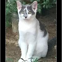 Adopt A Pet :: Petey - Waldorf, MD