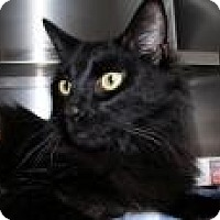 Adopt A Pet :: Jick *CL* - Independence, MO