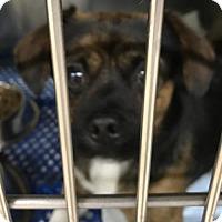 Adopt A Pet :: 49459 Digger - Zanesville, OH