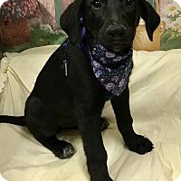 Adopt A Pet :: JAKE - Fort Pierce, FL
