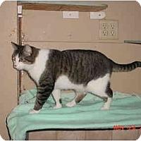 Adopt A Pet :: Sassy - Pendleton, OR