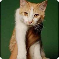 Adopt A Pet :: Squeak - New York, NY