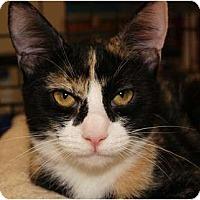 Adopt A Pet :: Primrose - San Ramon, CA