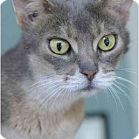 Adopt A Pet :: Aurora - Columbus, OH