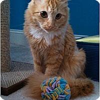 Adopt A Pet :: Mango - Waxhaw, NC
