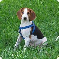 Adopt A Pet :: Hunter - Minneola, FL