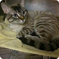 Adopt A Pet :: Julio - Hamilton, ON